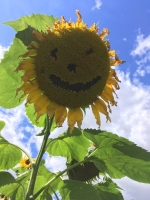 A happy flower for Open Day 2017